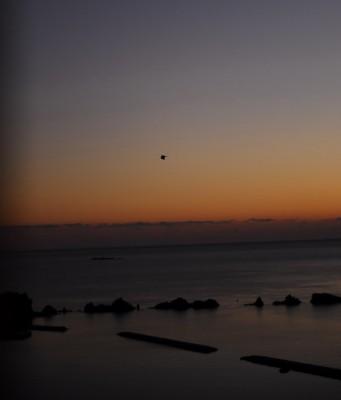 宿泊先のロイヤルホテルから見た日の出。橋杭岩がとても心にのこりました